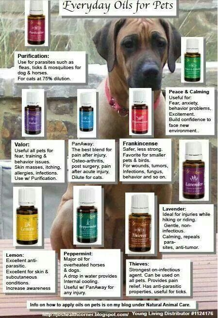 15 Best Images About Dog And Cat Health On Pinterest