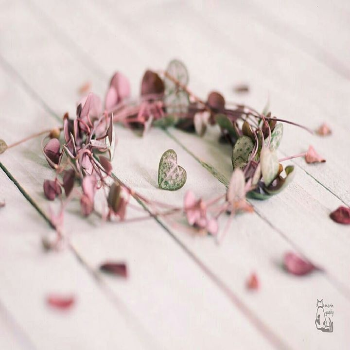من خلاصات العبر التي نأخذها من قصص الأنبياء في القرآن أن الأمل بالله لا ينقطع ولو في ظلمات البحر وبطن الحوت ولو أمام بحر طوق Plants Heart Hair Accessories