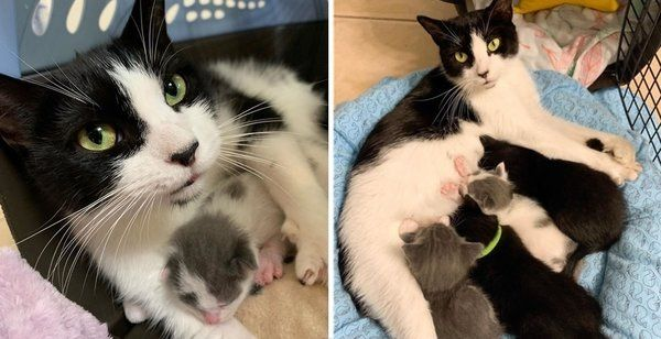 Rescued Cat Takes Orphaned Kittens Under Her Wing One Of Them Is Much Tinier Cat Rescue Cats Kittens