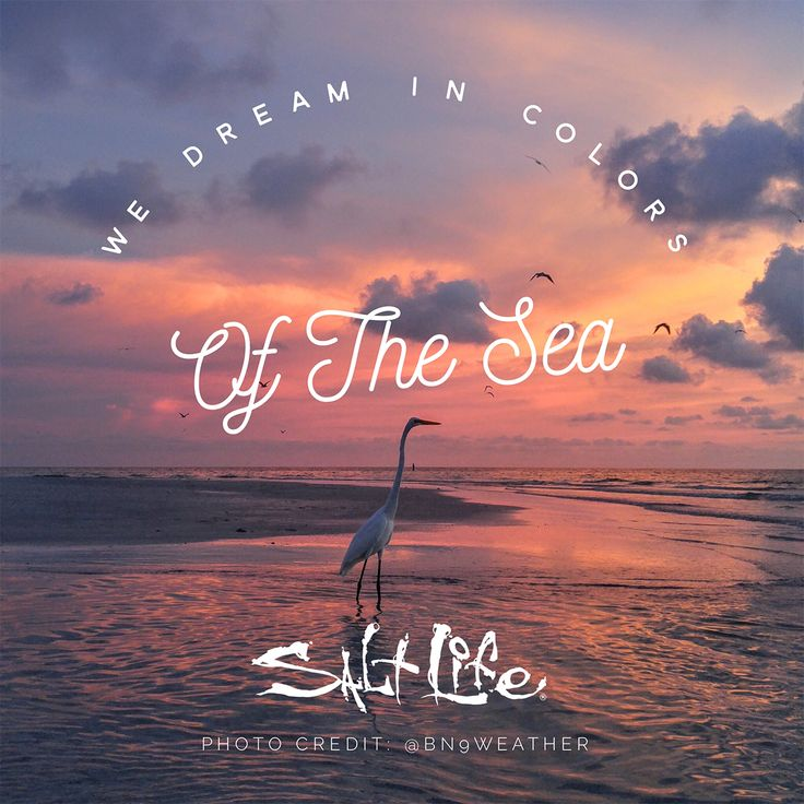 Dreaming Of Summer Quotes: 502 Best Beach Quotes Images On Pinterest