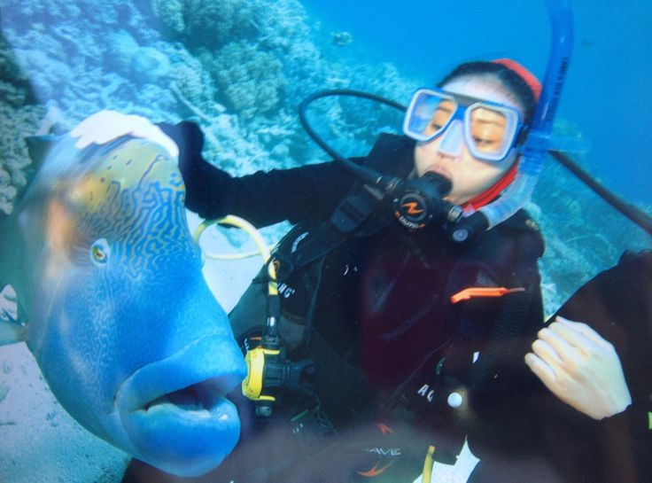 Great Barrier Reef in Great Barrier Reef, QLD