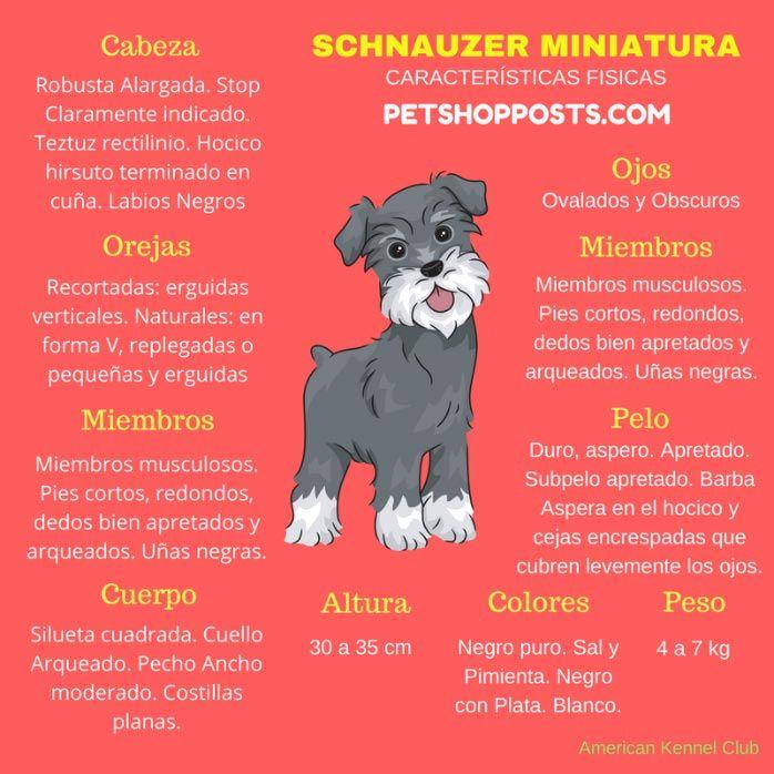 Caracteristicas del Schnauzer Miniatura, Caracteristicas Schnauzer Miniatura