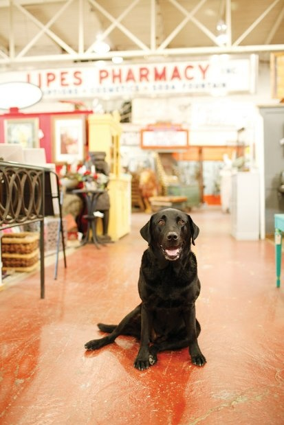 Sally at Black Dog Salvage.
