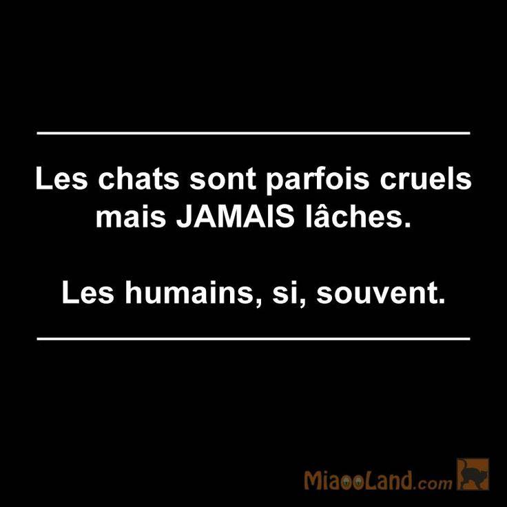 Citation chat Les chats sont parfois cruels mais JAMAIS lâches. Les humains, si, souvent.
