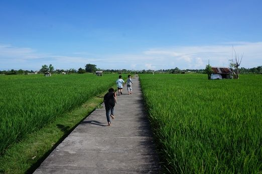 The green rice fields are really great view to accompany you while jogging. Photo by Raditya Margi.