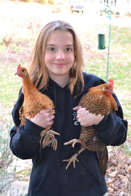 Büyüyen gün: Arka Bahçe Tavuklar yaklaşık 12 Gerçekler.