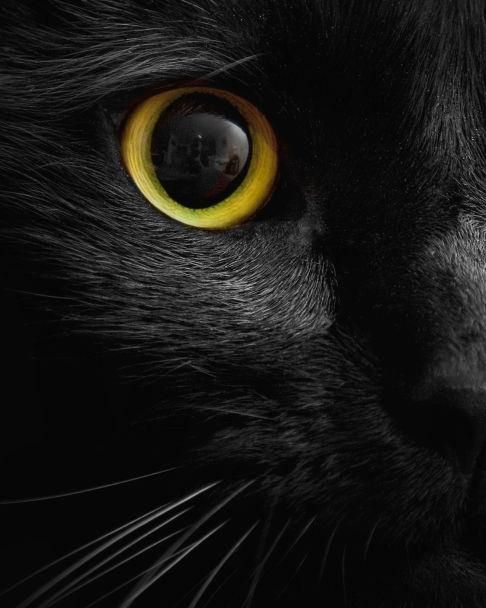 Photograph of black cat's golden eye