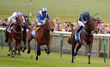Chatham delivers sister to Air Force Blue  https://www.racingvalue.com/chatham-delivers-sister-to-air-force-blue/