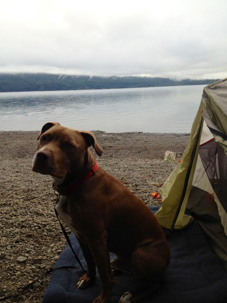 Dog Friendly Hotels In The San Juan Islands