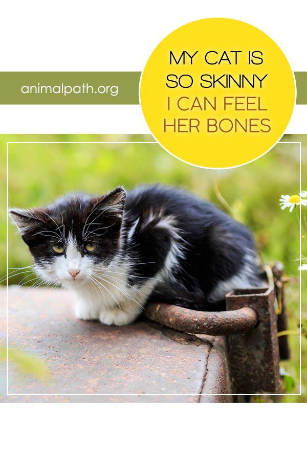 My Cat Is So Skinny I Can Feel Her Bones Senior Cat Food Cats Pets Cats
