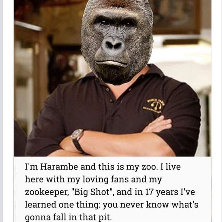 Best Dank Memes Images On Pinterest Automobile Beautiful - 20 hilarious photos of what zookeepers get up to after closing hours