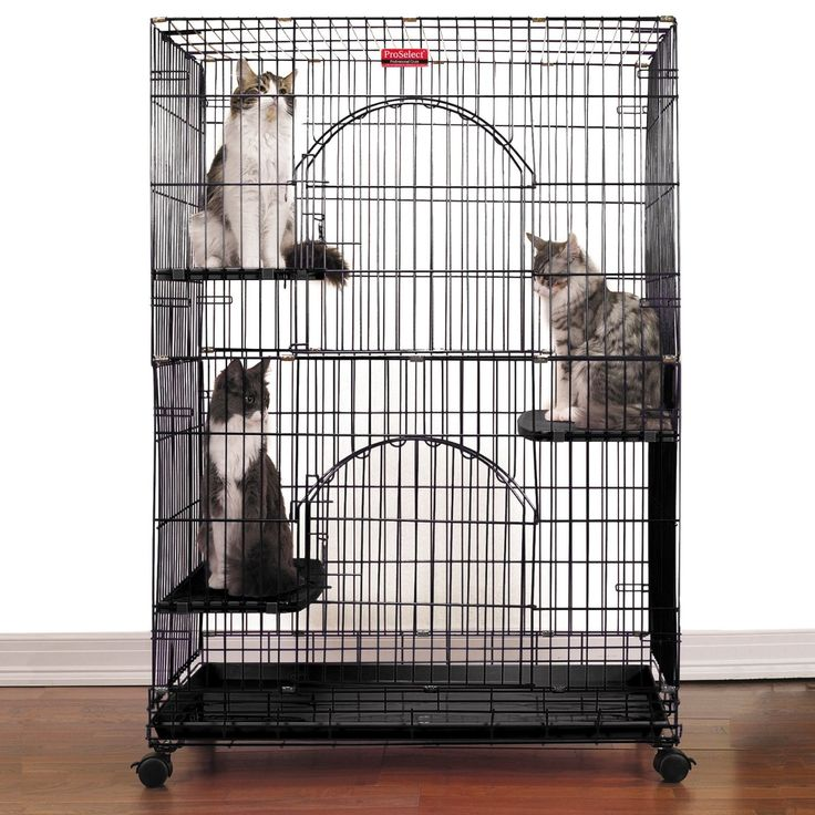 Top 4 Cat Playpens between $100 and $250: So, your first question might be: why would I need a cat playpen?  Well, if you are a working person with one or more cats waiting at home for you, you might actually be interested
