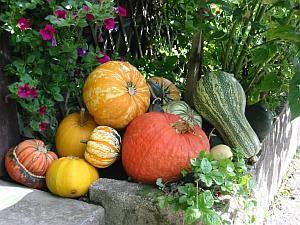 353 Best Images About Garten Und Pflanzen On Pinterest | Manche ... Gartentipps Winter Beachten