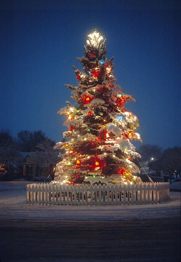 outdoor christmas tree by utah images outdoor christmas tree photograph outdoor christmas tree fine art prints and posters for sale - Lighted Outdoor Christmas Tree