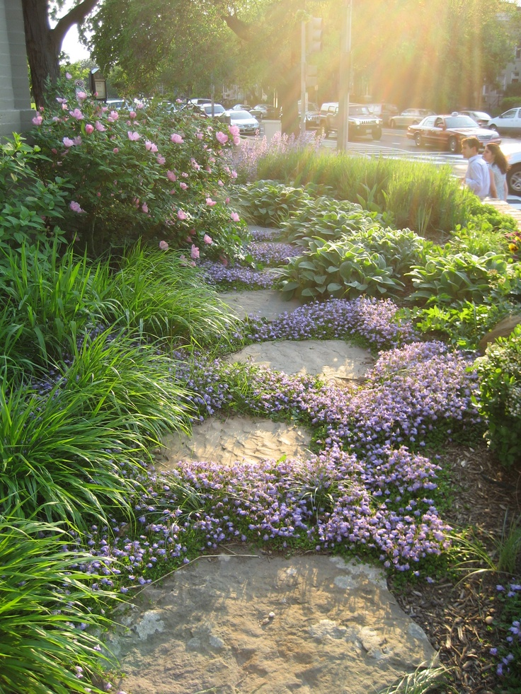 Mazus Blooms Between Stepping Stones In A Washington, D., Garden Designed  By Landscape Architect Thomas Rainer. Looking For Something Similar To  Plant In A ...