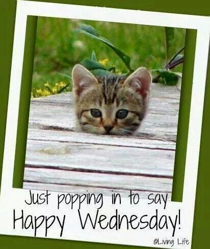 Just popping in to say hi happy Wednesday | Days of weeks ...