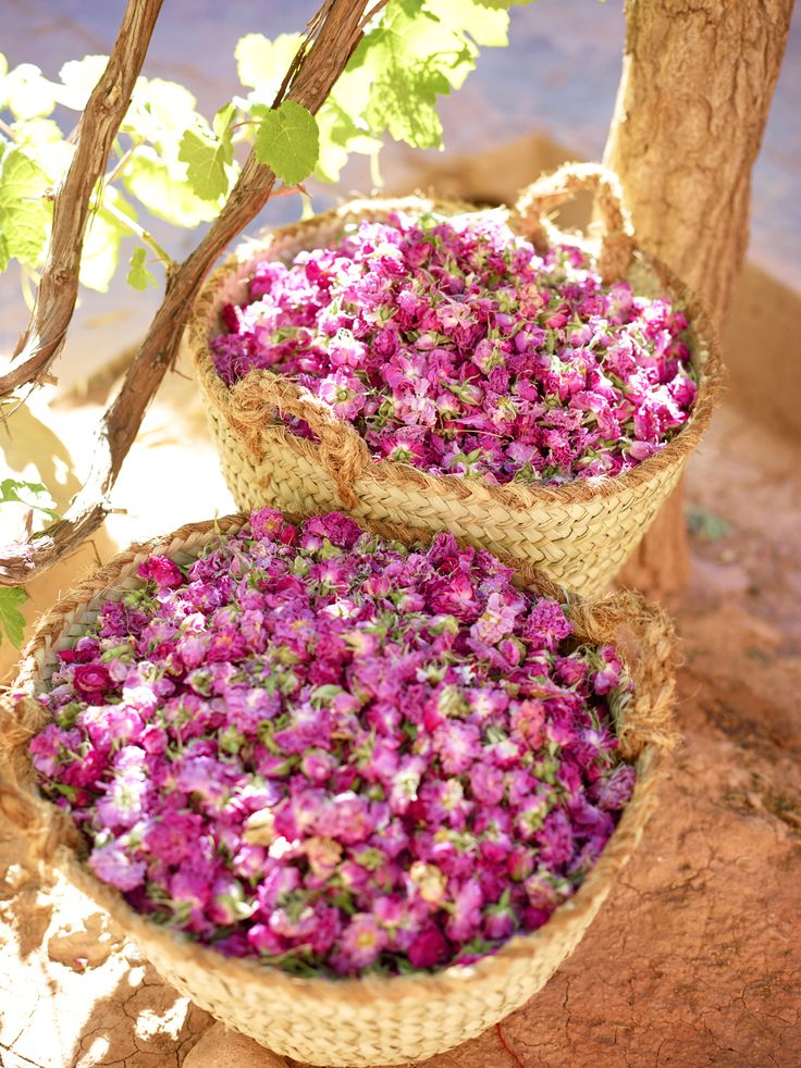Read Valley of the Roses: discover Morocco's floral festival
