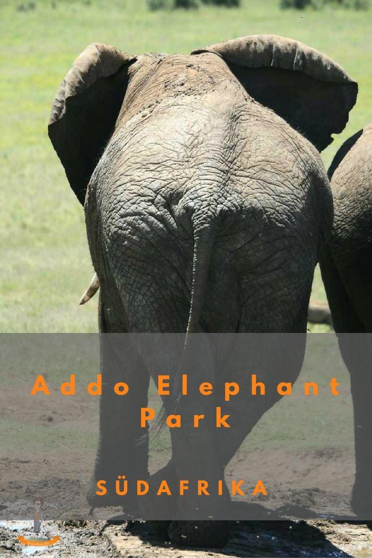 Der Addo Elephant Park – Afrika am Ende der Garden Route