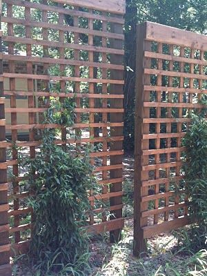 Simple DIY privacy trellis, perfect for garden beds and climbing plants.