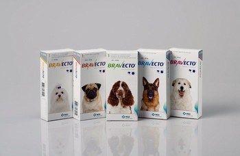Bravecto® Zur Behandlung eines Zecken- und Flohbefalls bei Hunden.