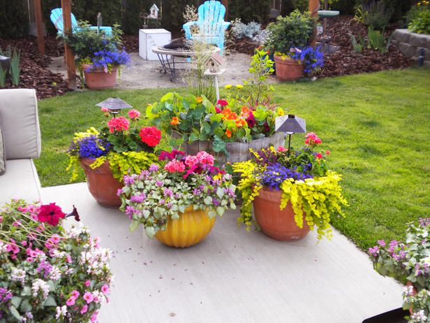 Gardening Ideas with Terracotta Pots | Riot Of Colorful Plants And Bright