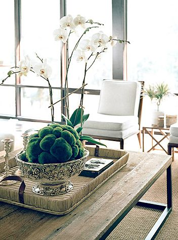 coffee table, moss, orchids