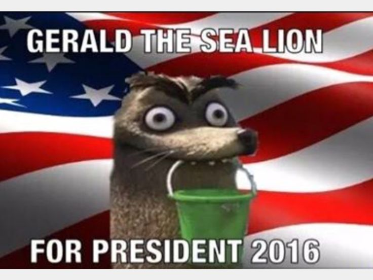 Instead of Donald trump or Hillary Clinton