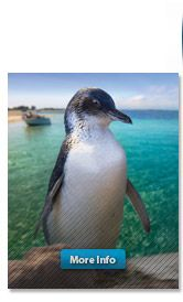 Have a Wild Day Out at Penguin Island western Australia