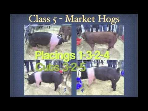 ▶ Livestock Judging Part 2 - YouTube