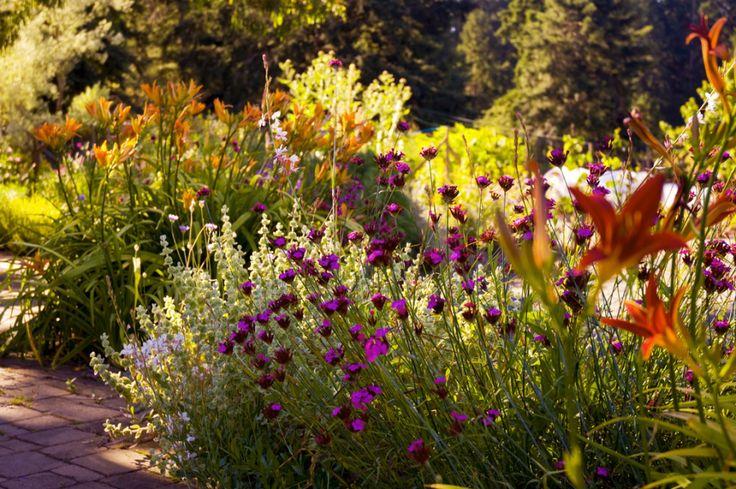 Mediterranean gardening: points of attention.