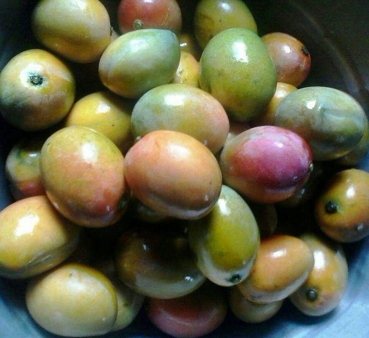 Mangos ciruela | El Salvador en fotos | Pinterest | Mango
