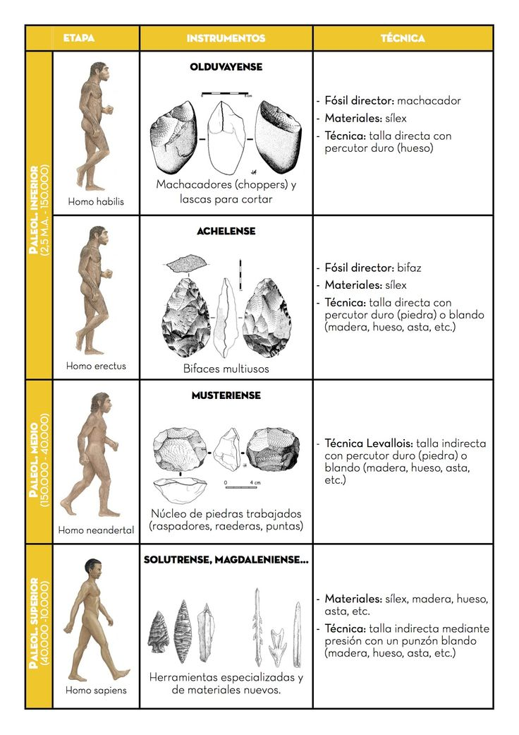 a new understanding of neanderthals Homo neanderthalensis, an introductory guide a complete summation of neanderthals, all the details with no filler stuff you could have 3% neanderthal dna.