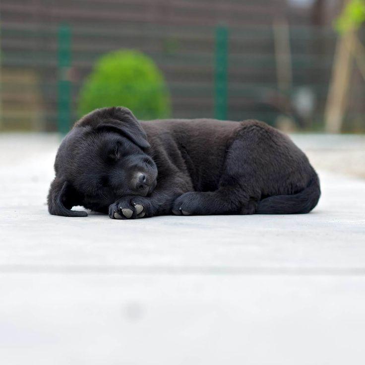 Pfotentick – Hundefotografie & schöne Dinge für Hunde und Besitzer…