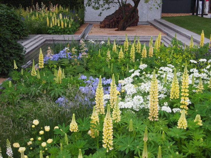 8 best lupinus chandelier images on pinterest chandelier lupinus chandelier and cashmere cream google suche aloadofball Image collections