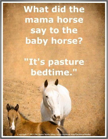 """What did the mama horse say to the baby horse?""♥ Pinned with gratitude by www.DressageWaikato.co.nz."