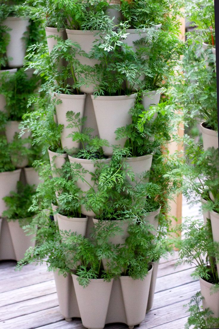 Growing Root Vegetables Vertically GreenStalk Vertical