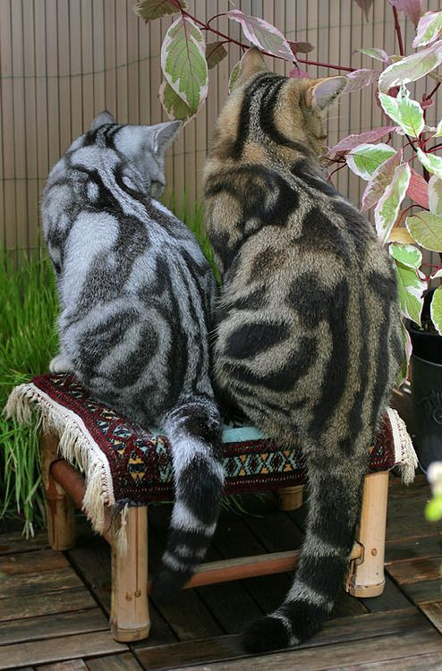 Patterned cats