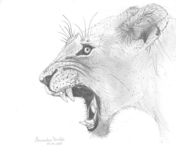 leon a lapiz dibujo