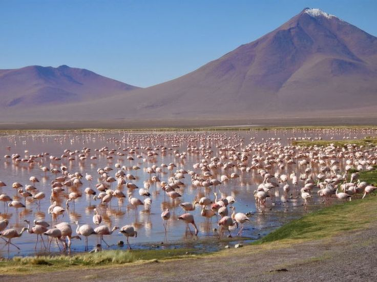 Flamingos are the most famous inhabitants of the Atacama Desert