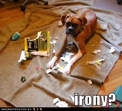 Google Image Result for http://1.bp.blogspot.com/-cBZhHa2xywk/Tu_G6lmhkjI/AAAAAAAACa8/albIohzAcMQ/s400/1a887_funny-dog-pictures-dog-ate-your-book-about-dogs.jpg