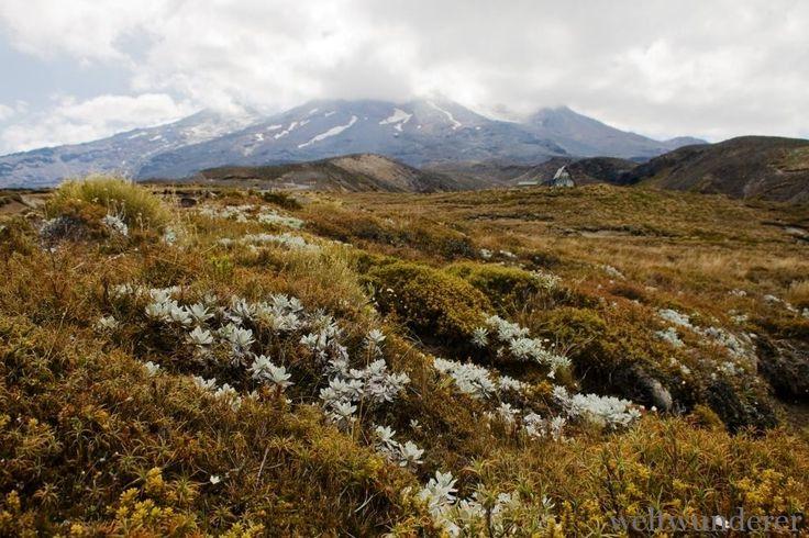 Mount Ruapehu Tongariro Weltwunderer
