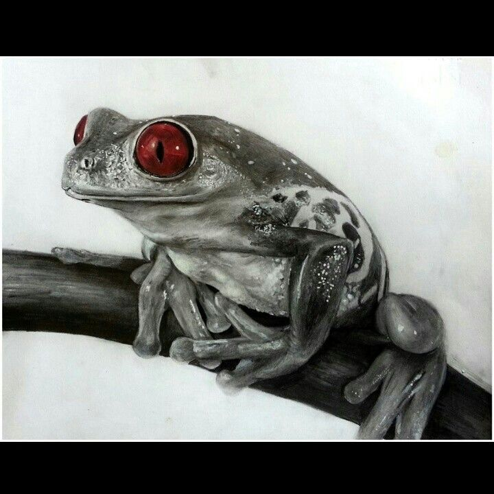 Frog - mixed media (graphite, posca pen, red colored pencil)