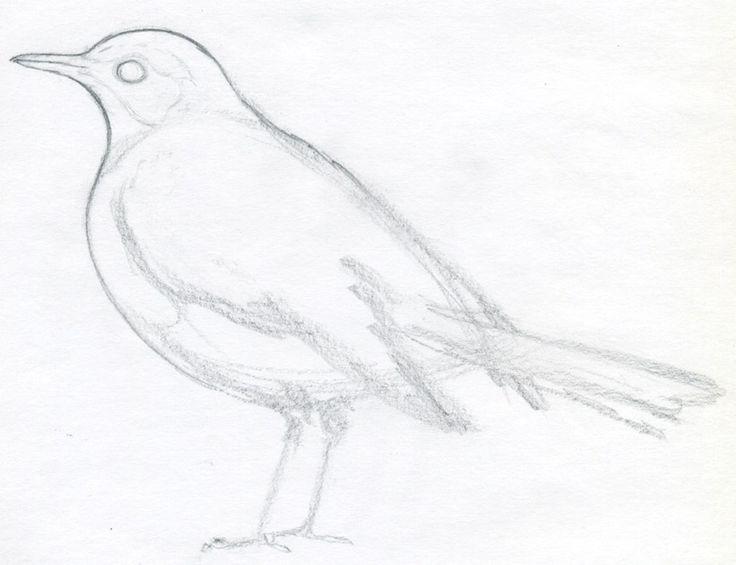 The 25 best ideas about Bird Outline on Pinterest  Bird template