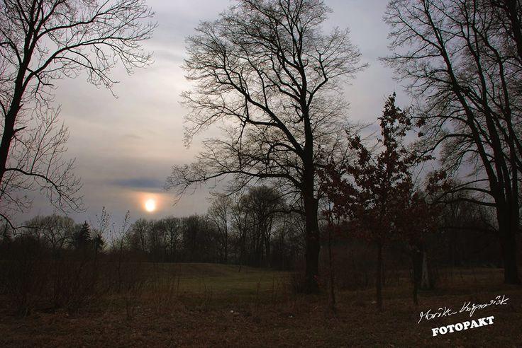 Jesień, w parku kasztany zakopują się w liściach jak małe, zielone jeże :) Legnica, międzywale fot. Monika Kasprowiak