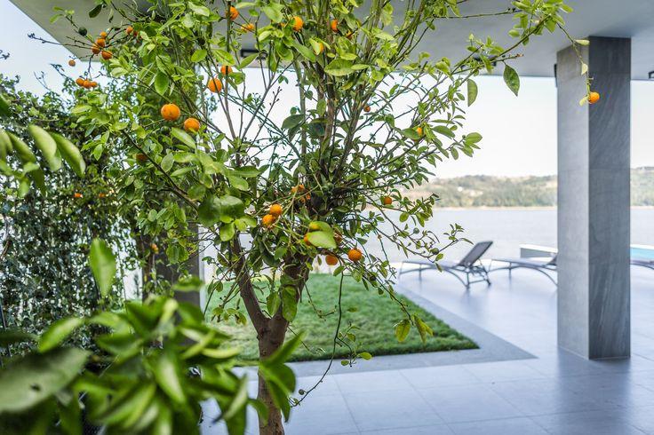 Rośliny do wnętrz- Hotel Heron- BS Ogrody