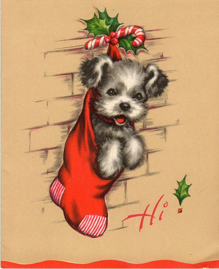 Puppy in a stocking