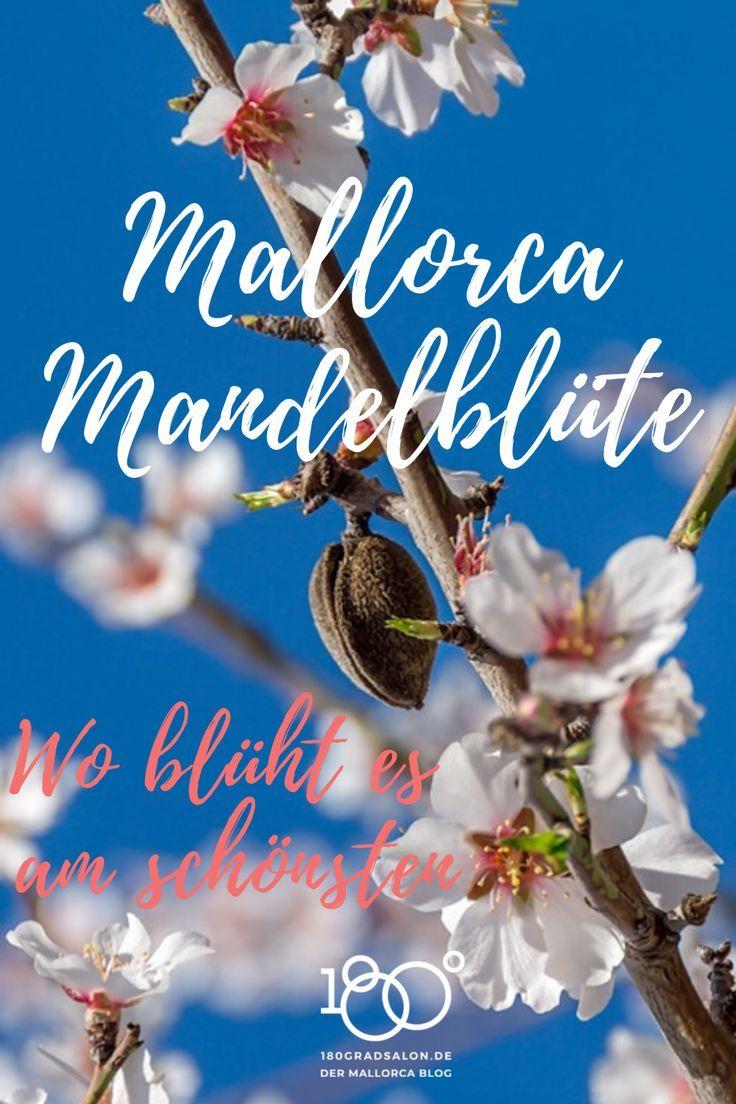 Mandelblute Auf Mallorca 2020 Wo Bluht Es Am Schonsten Alle