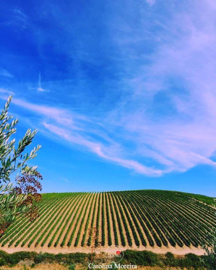 Douro: Um perfeito quadro de vinhedos . [Photo: Carolina Moreira @carolinanmoreira ]