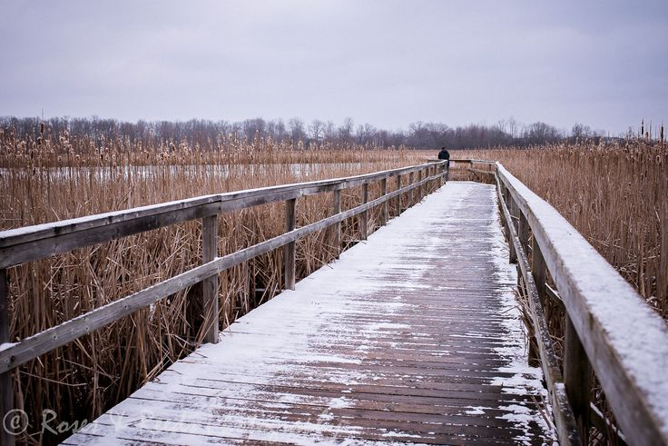 Leading lines & a marshland board walk. Not many birds out today.