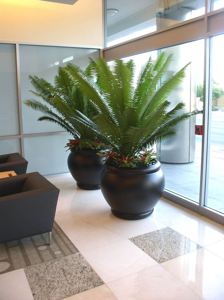 12 Best Examples Of Interior Plant Design Images On Pinterest Home Plants Indoor House Plants